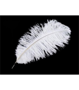 Ostrich Feather 2nd Quality (44 - 50 cm) - 25 units