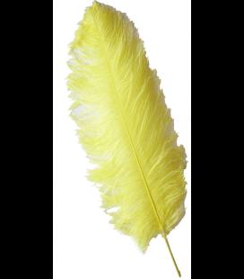 Pluma de Avestruz de 1ª Calidad (57cm o más).
