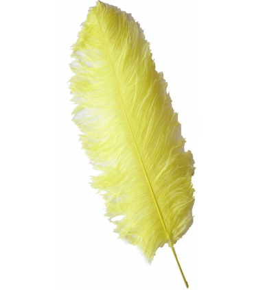 Pluma de Avestruz de 1ª Calidad (57cm o más). *6 UNIDADES*