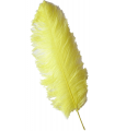1st Quality Ostrich Feather (57cm or more). * 6 UNITS *