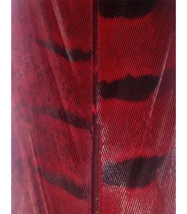Pluma Faisán (70 a 80 cm) -12 uds. - Color Rojo