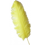 Female Wing
